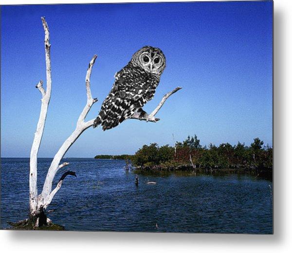 Owl In Dead Tree Metal Print by Fred Leavitt