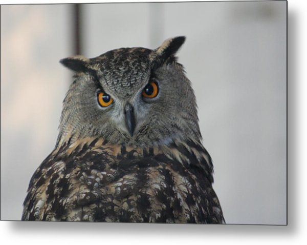 Owl Metal Print by Jeff Wright