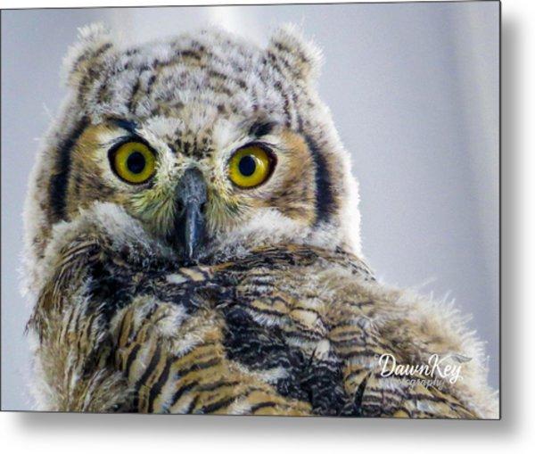 Owlet Close-up Metal Print