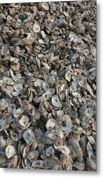 Oyster Shells After Processing Metal Print