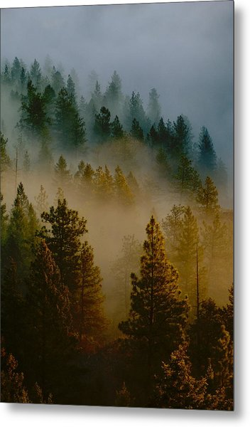 Pacific Northwest Morning Mist Metal Print