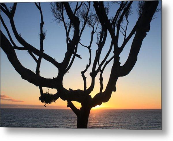 Pacific Tree Sunset Metal Print