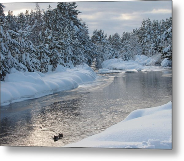 Paddling Up The Snowy River Metal Print