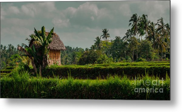 Paddy Fields Metal Print
