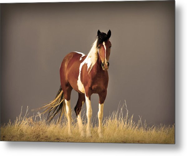 Paint Filly Wild Mustang Sepia Sky Metal Print