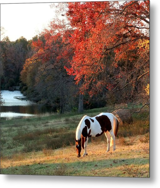 Paint In The Fall Metal Print