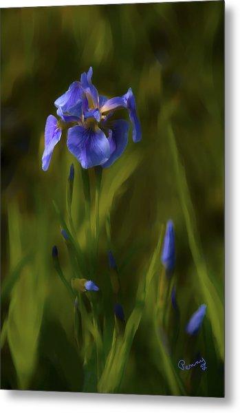 Painted Alaskan Wild Irises Metal Print