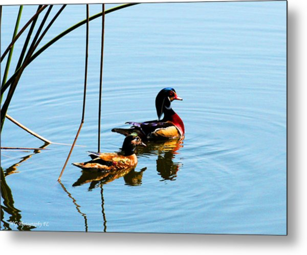 Painted Ducks Metal Print
