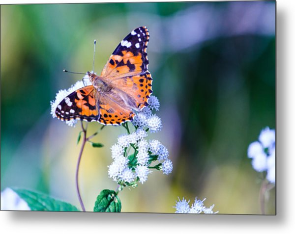 Painted Lady Butterfly 1 Metal Print