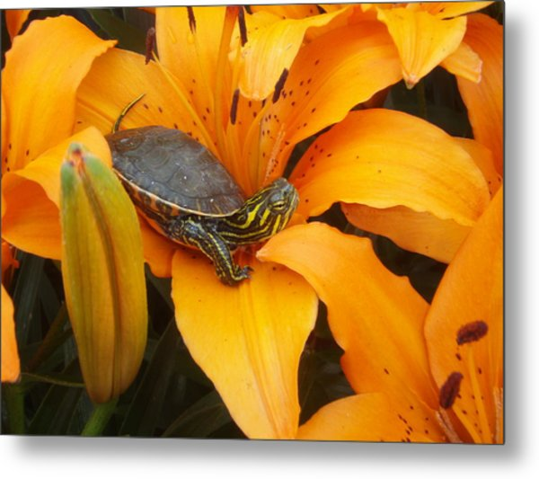 Painted Lilly Metal Print