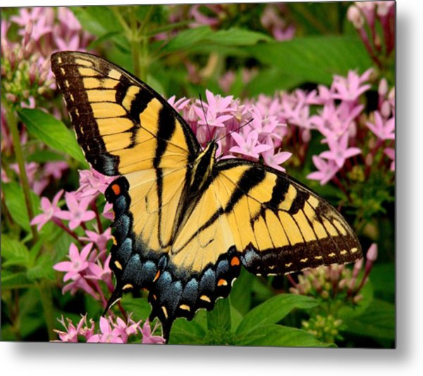Painted Wings Metal Print