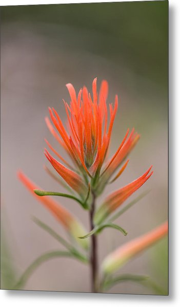 Painterly Paintbrush Metal Print