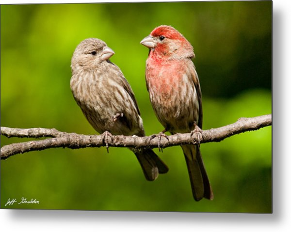 Pair Of House Finches In A Tree Metal Print