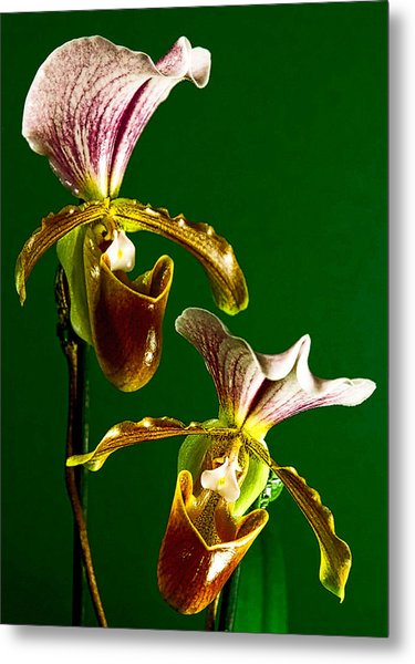 Pair Of Lady Slipper Orchids Metal Print
