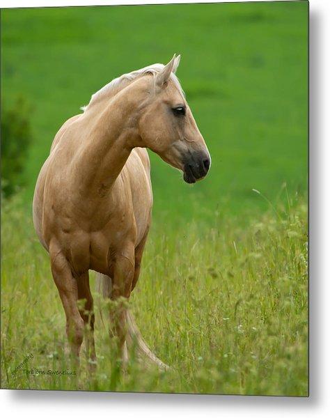 Pale Brown Horse Metal Print