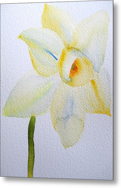 Pale Yellow Daffodil Metal Print by Sacha Grossel