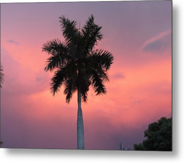 Palm Against Salmon Pink Metal Print by Beth Williams