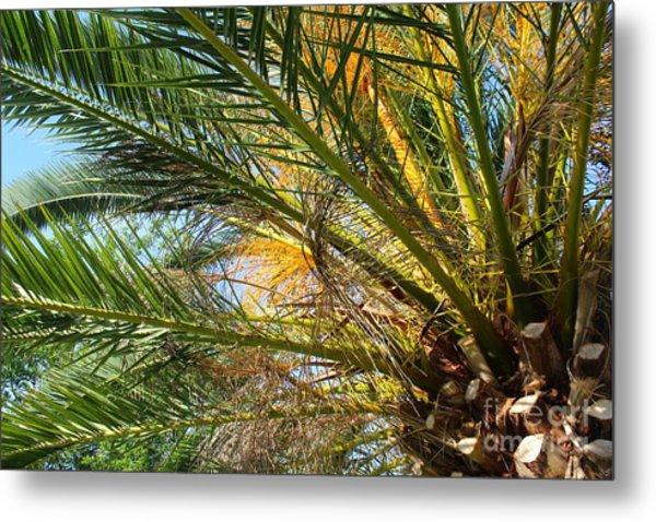 Palm Canopy Metal Print