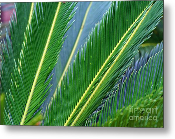 Palm Cycas Fronds Metal Print