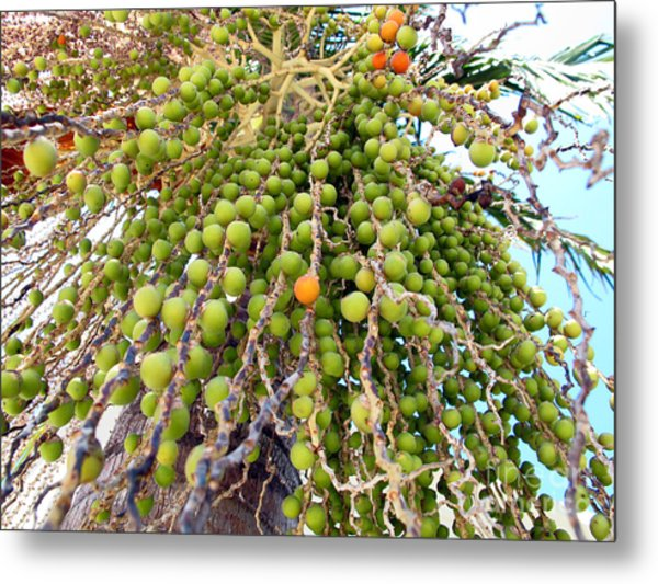 Palm Grapes Metal Print