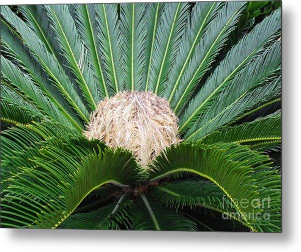 Palm Plant Metal Print