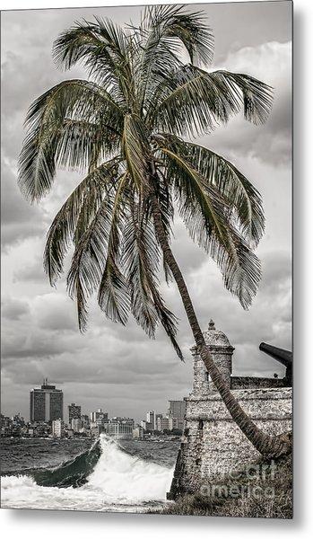 Palm Tree In Havana Bay Metal Print