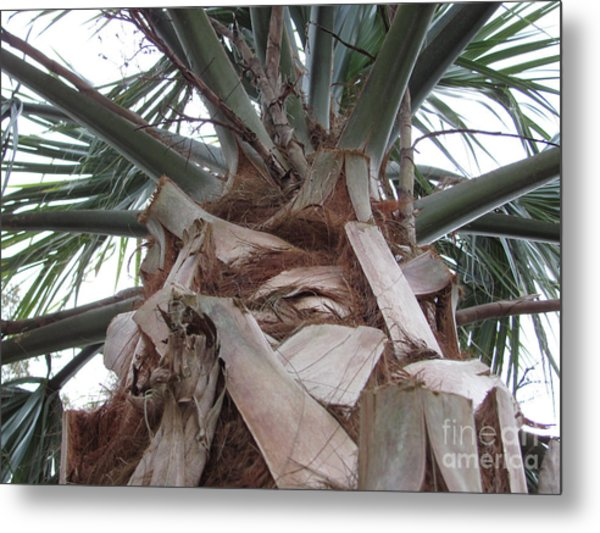Florida Palm Metal Print