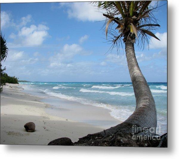 Palm Tree On The Beach Metal Print