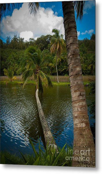 Palm Tree Over River Metal Print