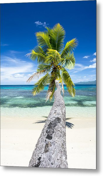 Palm Tree Over Water Metal Print