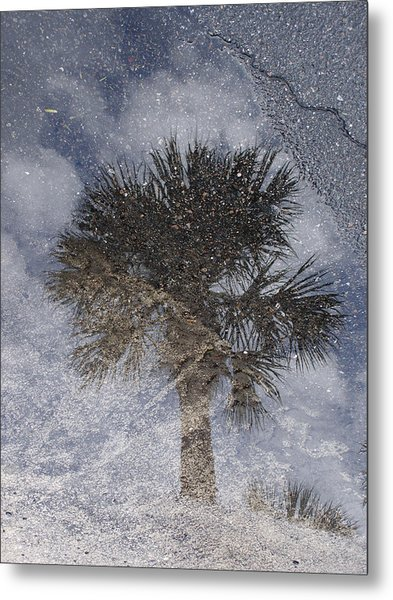 Palm Tree Reflection Metal Print by Michel Mata