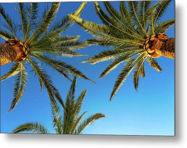 Palm Trees Against A Blue Sky Metal Print by Wladimir Bulgar