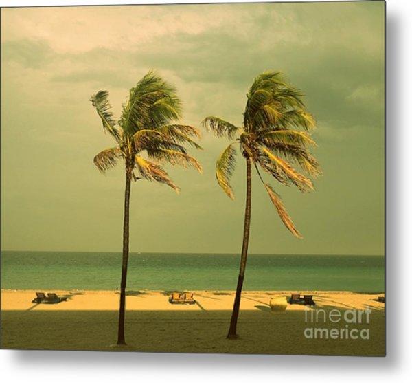 Palm Trees At Hallendale Beach Metal Print