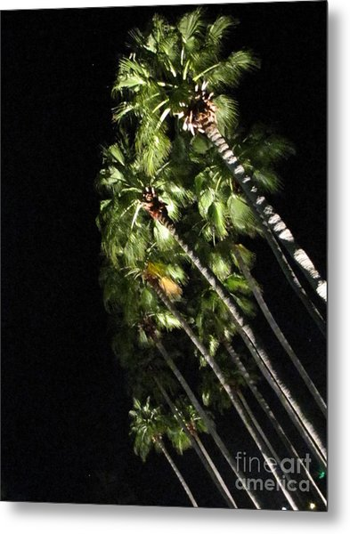 Palm Trees At Night Metal Print by Gayle Melges
