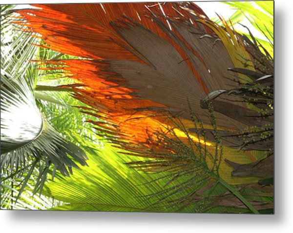 Metal Print featuring the photograph Palms by Debbie Cundy