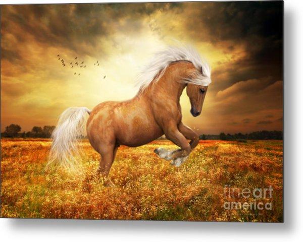 Palomino Horse Sundance  Metal Print