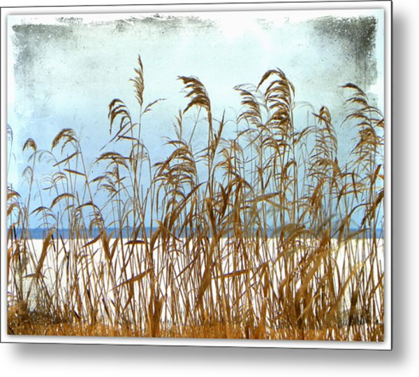 Pampas Grass Metal Print by Dianne  Lacourciere
