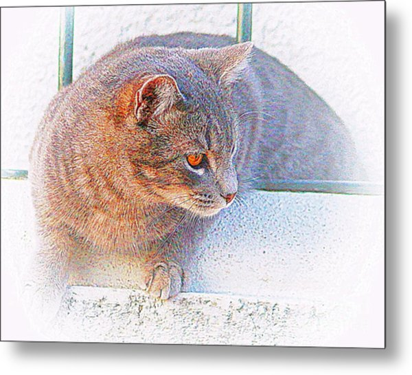 Pancho On The Roof Terrace Metal Print