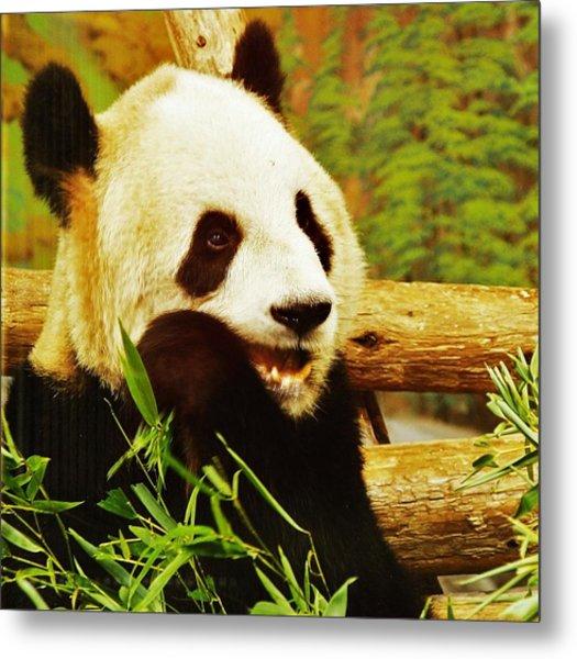 Panda Bear Metal Print by Al Fritz