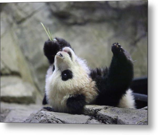 Panda Cub Metal Print