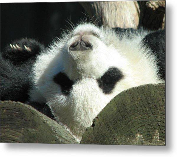 Panda Playing Possum Metal Print