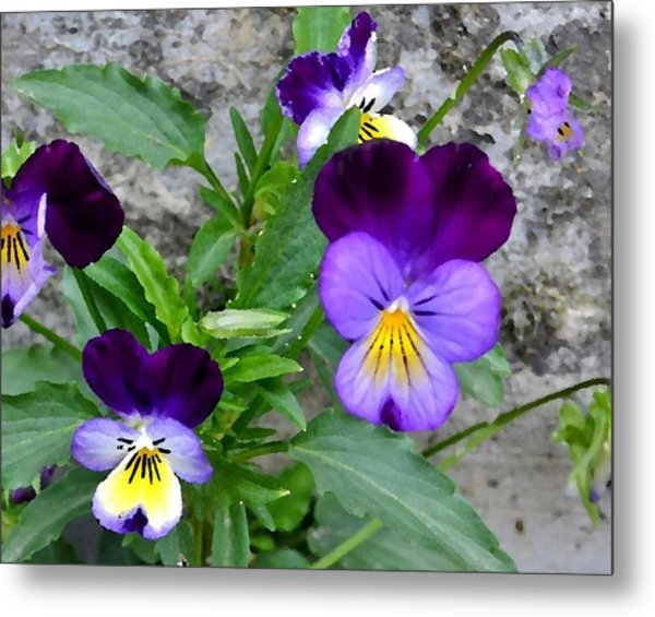 Pansies - Painterly Metal Print