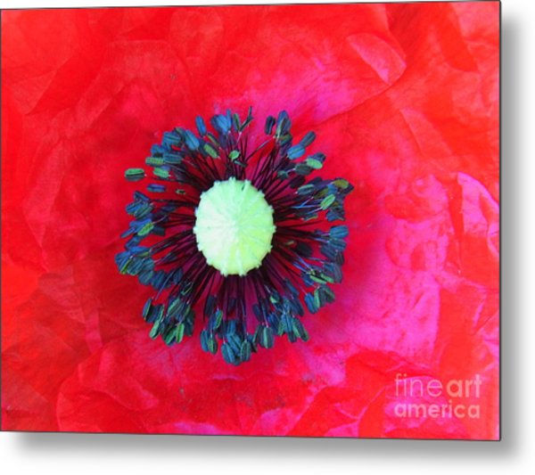 Papaver's Eye Metal Print