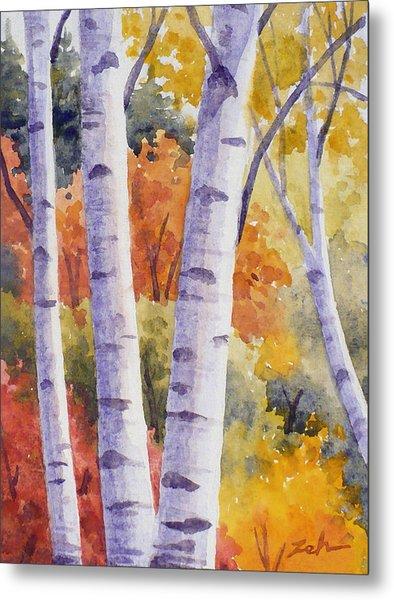 Paper Birches In Autumn Metal Print