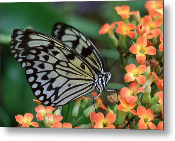 Paper Kite Butterfly Metal Print