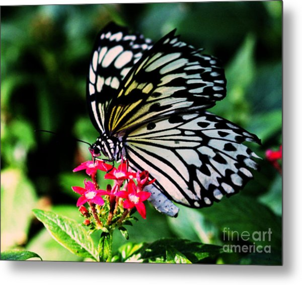 Paper White Butterfly Metal Print