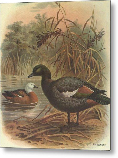Paradise Duck Metal Print