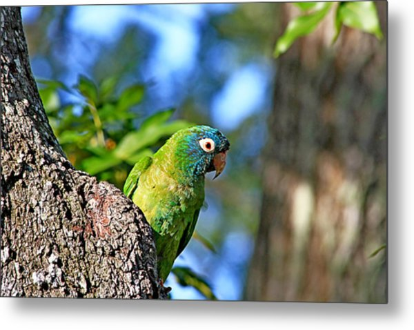 Parakeet In The Park Metal Print