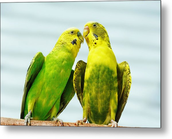 Parakeet Love Metal Print