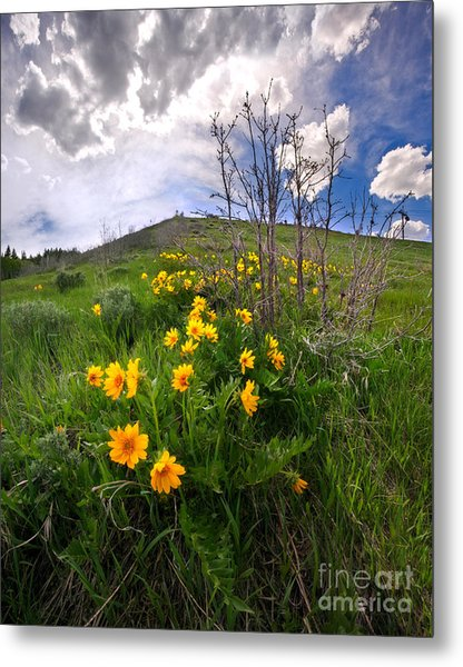 Park City Slopes In Spring Metal Print by Matt Tilghman